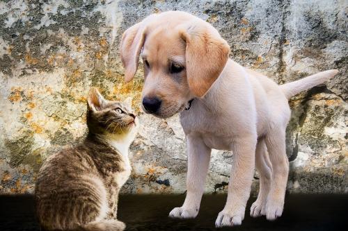 3 razas de perros que se llevan muy bien con los gatos